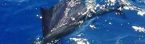 http://www.alexonthebeach.com/wp-content/uploads/2011/02/fishing-10-495x150.jpg