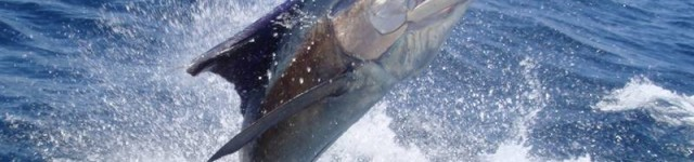 http://www.alexonthebeach.com/wp-content/uploads/2011/02/fishing-15-640x150.jpg