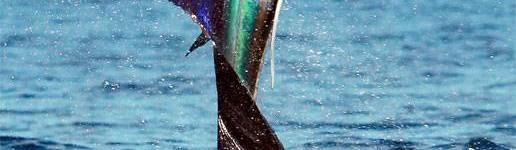 http://www.alexonthebeach.com/wp-content/uploads/2011/02/fishing-19-516x150.jpg
