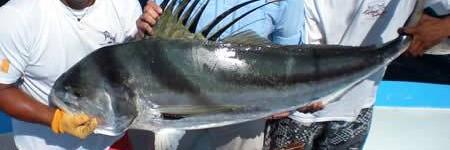 http://www.alexonthebeach.com/wp-content/uploads/2011/02/fishing-6-450x150.jpg