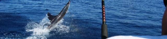 http://www.alexonthebeach.com/wp-content/uploads/2011/02/fishing-9-640x150.jpg