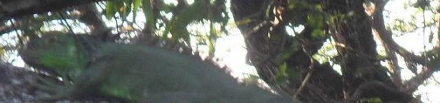 http://www.alexonthebeach.com/wp-content/uploads/2011/02/palo-verde-62-640x150.jpg