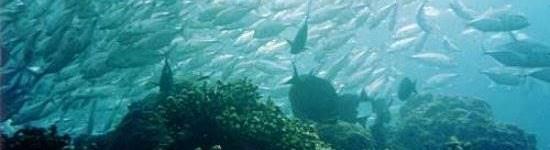 http://www.alexonthebeach.com/wp-content/uploads/2011/02/snorkeling-3-550x150.jpg