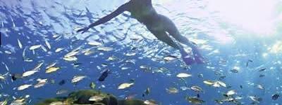 http://www.alexonthebeach.com/wp-content/uploads/2011/02/snorkeling-400x150.jpg
