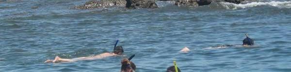 http://www.alexonthebeach.com/wp-content/uploads/2011/02/snorkeling-8-600x150.jpg